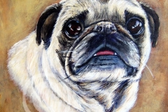 Pug-Pet-Potrait